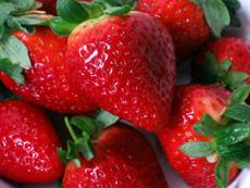 strawberries-100-mile-diet