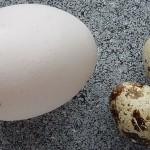 eggs gluten free diet